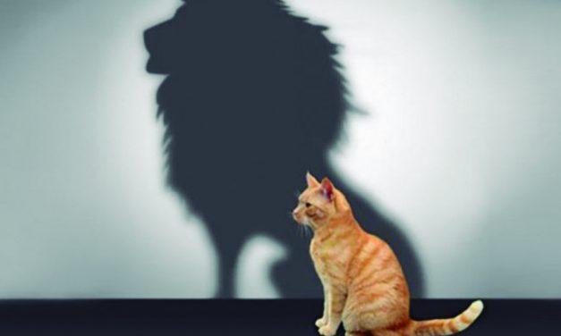 Grupo de desarrollo personal: Mejorando la autoestima